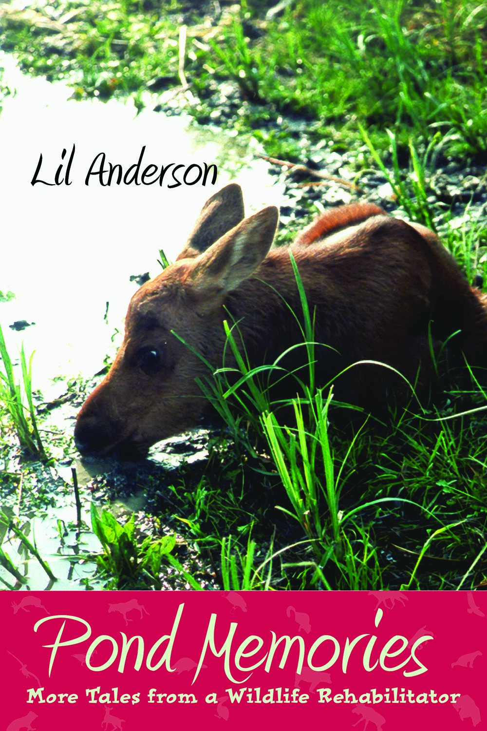 Pond Memories by Lil Anderson