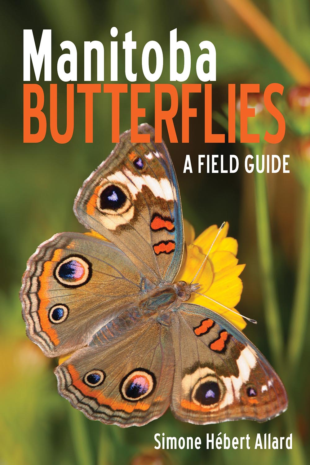 Manitoba Butterflies A Field Guide